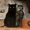 Grosses Katzen Interview   Öl aufLeinwand   100 x 100 cm